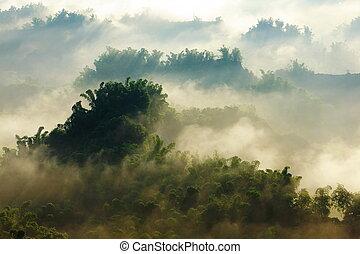 bambù, foschia, collina, mattina