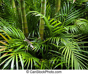 bambù, giardino