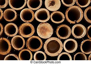 bambù, sezione