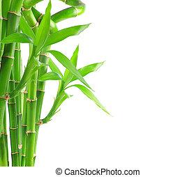 bambú