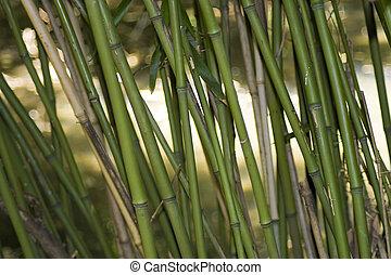 bambú, asiático