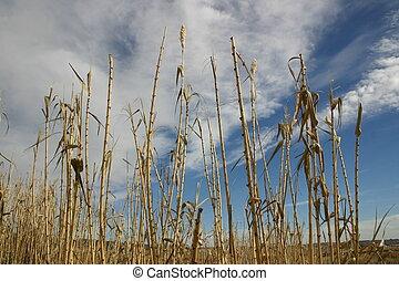 bambú, cielos