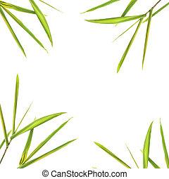 bambú, frontera