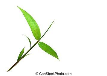 bambú, hoja, aislado