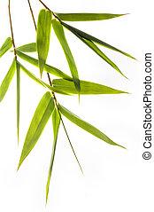 bambú, leafs