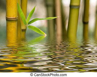bambú, reflexión de agua