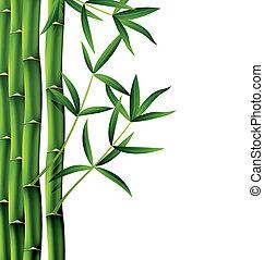 bambú, vector, ramas
