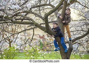 bambini, fratelli, natura, fiore, primavera, albero, due ragazzi, appendere, divertimento, detenere