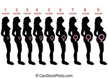 bambino, femmina, incinta
