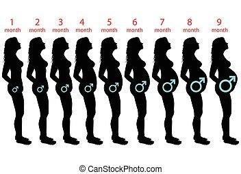 bambino, maschio, incinta