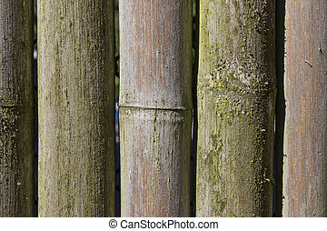 Bambo Texture Background 2