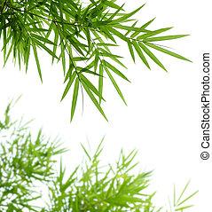 bamboe, bladeren
