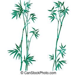 bamboe, illustratie
