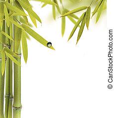 bamboe, spruiten, met, kosteloos, ruimte, voor, tekst