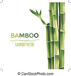 bamboe, vector, illustratie