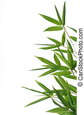 bamboo-, 葉
