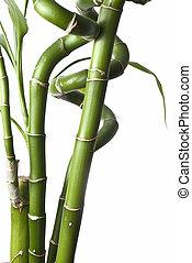 Bamboo 2.