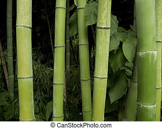 A group of bamboo trees up-close.