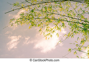 Bamboo against the sky in the daytime.