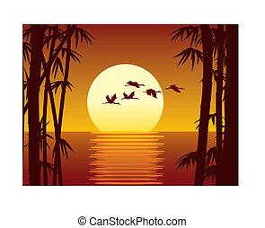 Bamboo and sundown