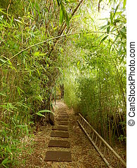 Bamboo archway with paving stone path, ladder alongside