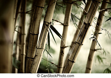 Bamboo background - Bamboo forest background. Shallow DOF.