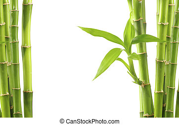 bamboo background - bamboo isolated on white