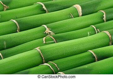 close-up of young bamboo sticks, focus is set in foreground