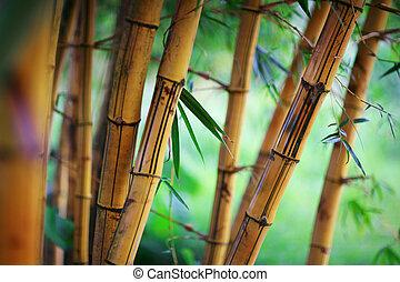 Bamboo background - Bamboo forest background. Shallow DOF.