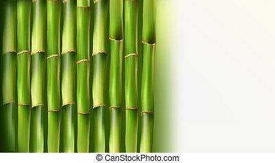 Bamboo background. Vector illustration.