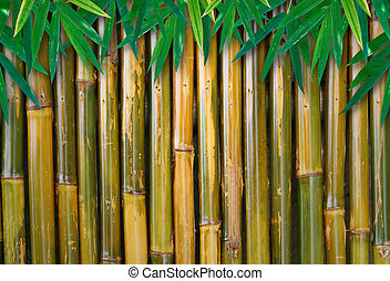 bamboo background with leaves