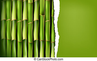 Bamboo background with ripped paper. Vector illustration.