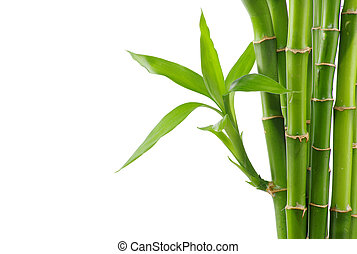 Bamboo isolated on a white