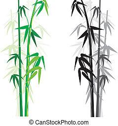 bamboo (bambusa) - bamboo background and frame