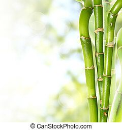 Bamboo - Beautiful fresh green bamboo background