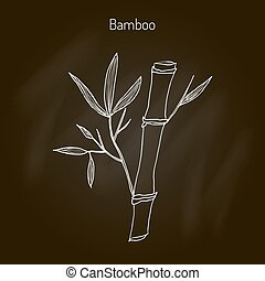 Bamboo branch with leaves