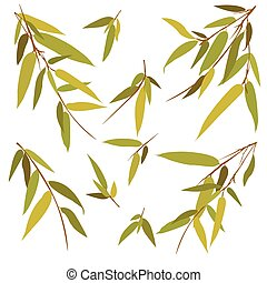 Bamboo branches isolated on white background.