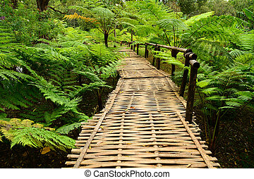 Bamboo bridge with ferns