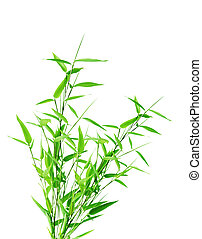 Bamboo bush - Green bamboo tree isolated on white background