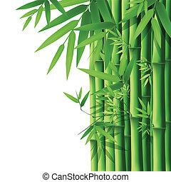 Bamboo,vector illustration