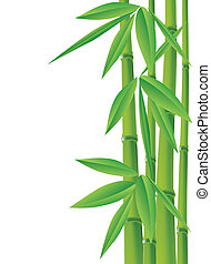bamboo, vector illustration with copy space