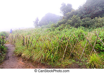 Bamboo fence for protect restricted area in nature trail.