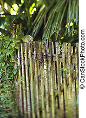 Bamboo fence with green plants.