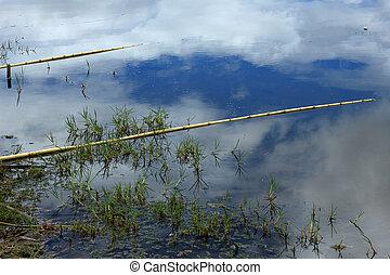 Bamboo Fishing Poles in a Lake