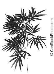 bamboo-, folhas