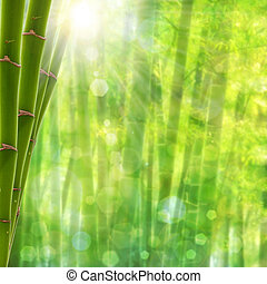 Bamboo forest. Abstract summer backgrounds with bright sun and beauty bokeh
