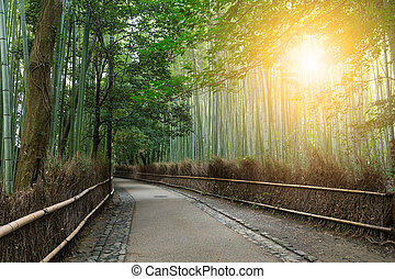 Bamboo forest and sunshine