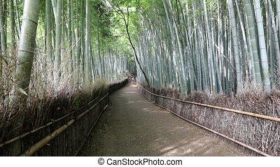 Bamboo forest Arashiyama background