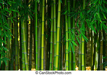 green bamboo stem in a japanese garden