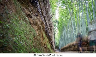 Bamboo forest in Arashiyama, Kyoto, Time Lapse in 4k